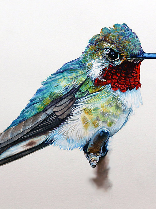 Hummingbird Study NO. 5        Original Painting