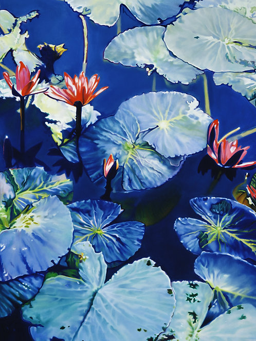 WATERLILIES NO.3   Limited Edition Paper Print