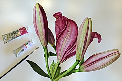 Daylilies_2.png