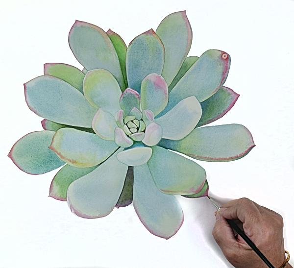 Succulent_4.png