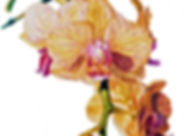 Yellow_Orchid_raw_2.jpg