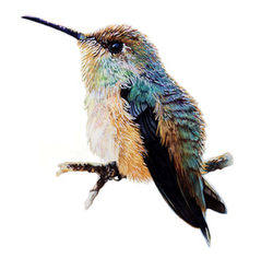 Hummingbird NO.1