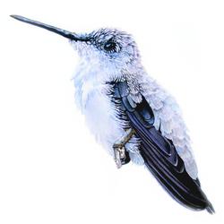 Hummingbird NO. 6