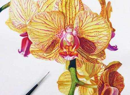 Online Watercolor Workshops!