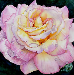 Rose With Water Drops is an Original Watercolor by Brynn Carroll