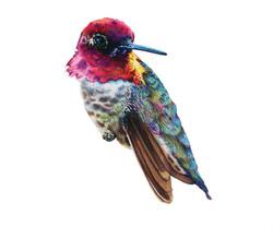 Hummingbird NO.3