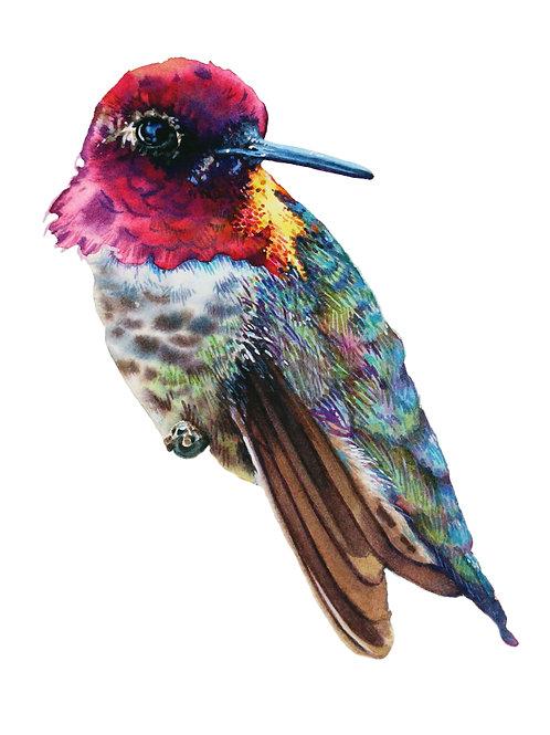 Hummingbird Study NO. 3         Original Painting
