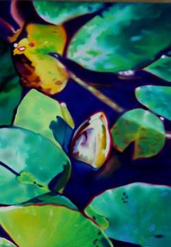 Waterlilies NO.12