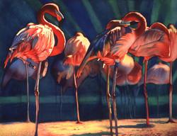 Flamingo's   NFS