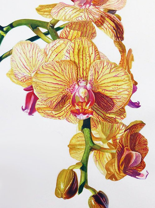 Yellow Orchid      Original Painting