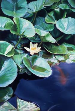 Waterlilies NO.4