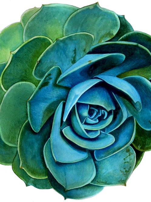 Succulents   Original Painting