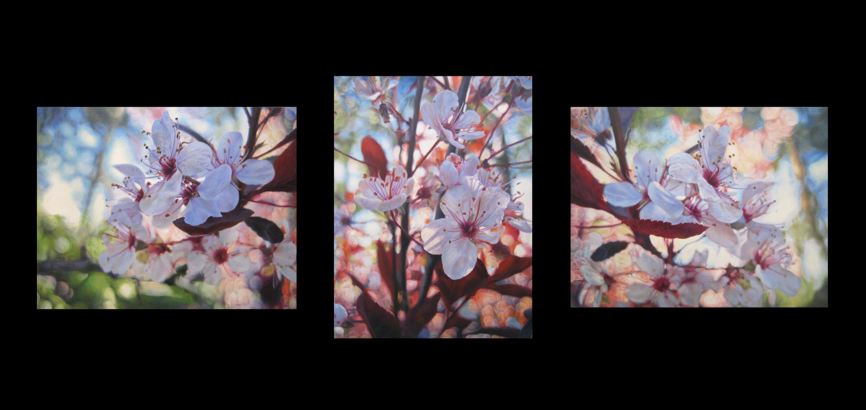 Fixate (Triptych)