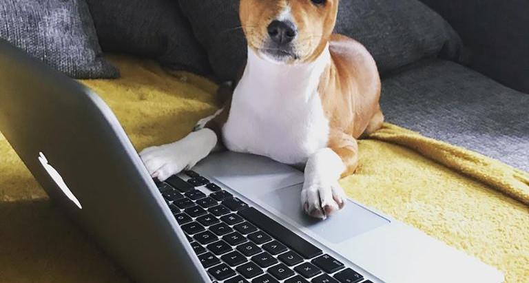Puppy Diaries - 2 months in!