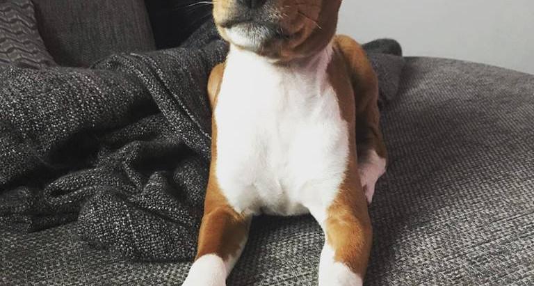 Puppy Diaries - Kimbles First Few Weeks