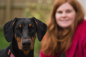 dobermann dog dog walking pet sitting pet visits dog sitting puppy training bristol