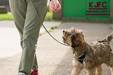 dog training bristol puppy training bristol