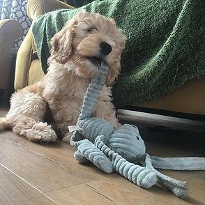 puppy visit.jpg
