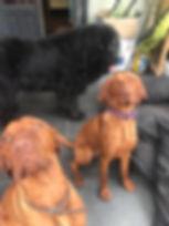 dog walking pet sitting pet visits dog sitting puppy training bristol