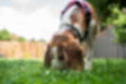 dog walking pet sitting pet visits dog sitting puppy training bristol