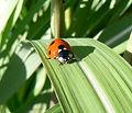 Pest Control Rio Rancho, Albuquerque
