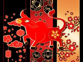 Lighting the Lantern for Lunar New Year