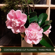 Third Prize Container Vase Cut Flowers[1