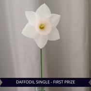 First Prize Daffodil Single[1].png
