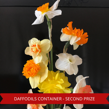 Second Prize Daffodils Container.png