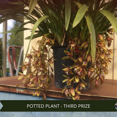 Third Prize Potted Plant.png