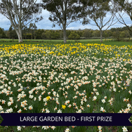 First Prize Large Garden Bed.png