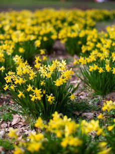 Kyneton Botanic Gardens- Spring-2.jpg