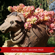 Second Prize Potted Plant.png