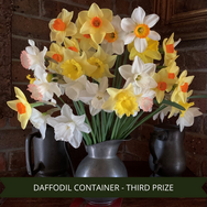 Third Prize Daffodils Container.png