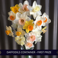 First Prize Daffodils Container.png