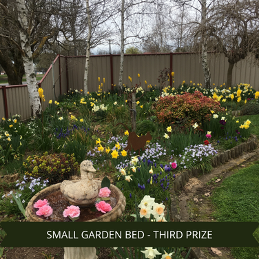 Third Prize Small Garden Bed.png