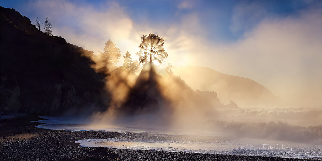Rarangi sunrise mist marlborough pine tree coast sea ocean beach fog waves light photography art
