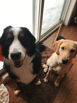 Our lovable and gentle dogs