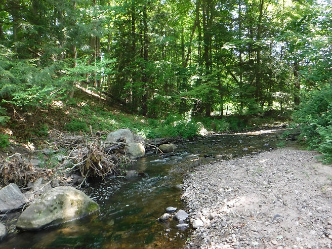 Bullet Hill Brook at Ewald Park 2018.JPG