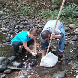 Macroinvertebrate Survey
