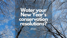 Water Your New Year's Conservation Resolutions?