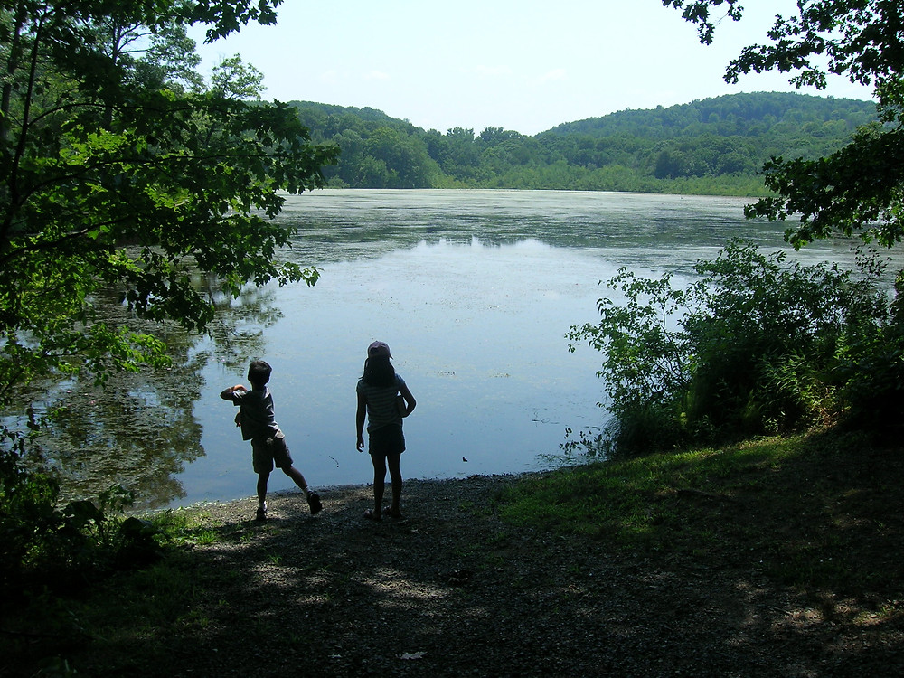 Join us for a walk around Transylvania Pond!