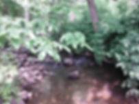 East Spring Brook at Kasson Rd 2013.jpg