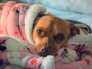 מהו מנוי רפואי לכלבים ומי צריך אותו?