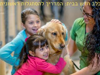 כלב חדש בבית: המדריך המלא להסתגלות הראשונית