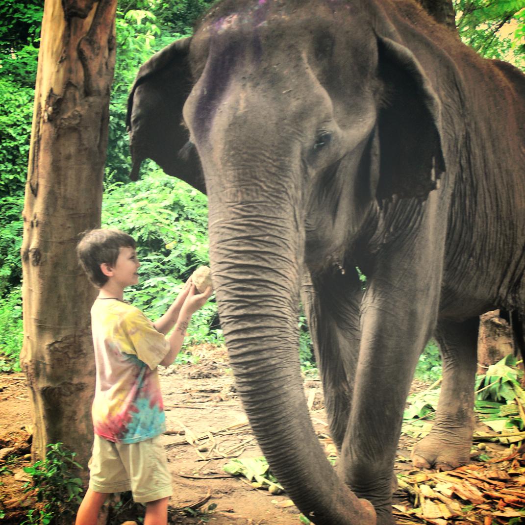 seamus feeding elephant_edited