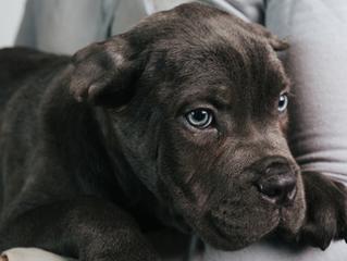 אימוץ כלבים בתל אביב: מענה על שאלות נפוצות