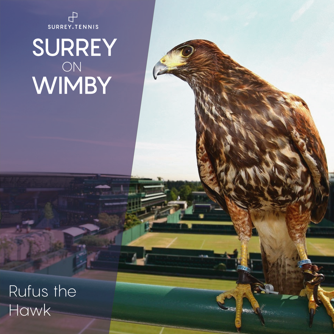 Surrey-on-Wimby-Rufus-the-Hawk.png
