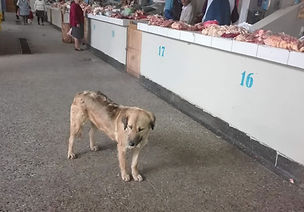 Peru-rescue-centre-street-dog-3.jpg