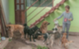 Peru-dog-rescue-centre-AnaMaio.jpg